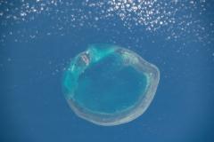 China-Dongsha-Atoll-National-Park